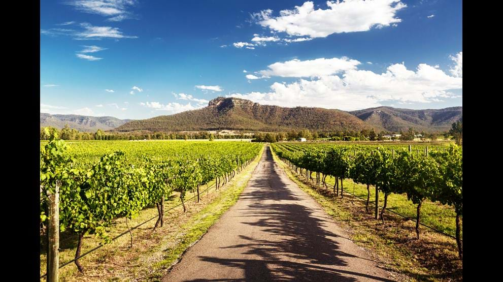 Vingårdene i Hunter Valley - Cruise i Australia