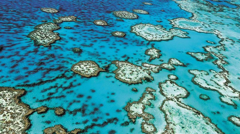 Great Barrier Reef - Cruise i Australia