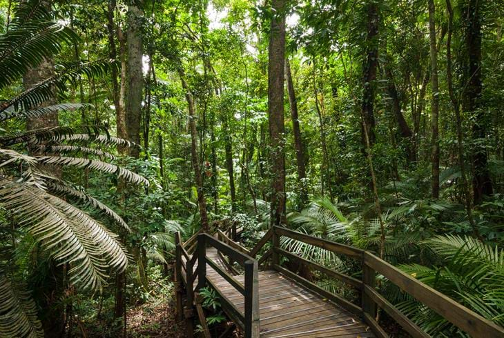 Cape Tribulation i Daintree Rainforest