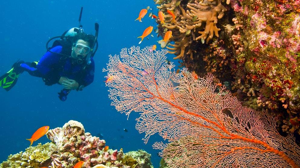 Dykker på Great Barrier Reef