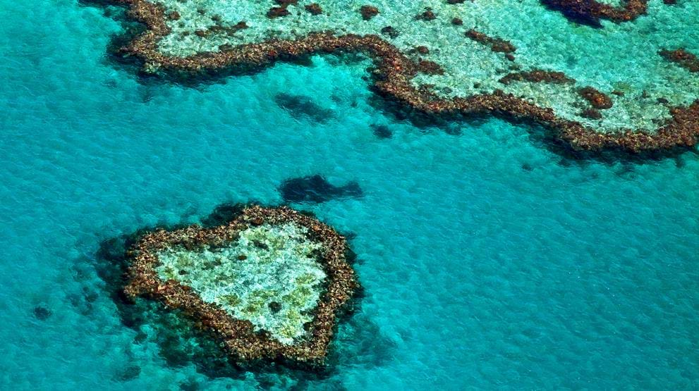 Heart Reef i Great Barrier Reef - Reiser til Whitsunday Islands
