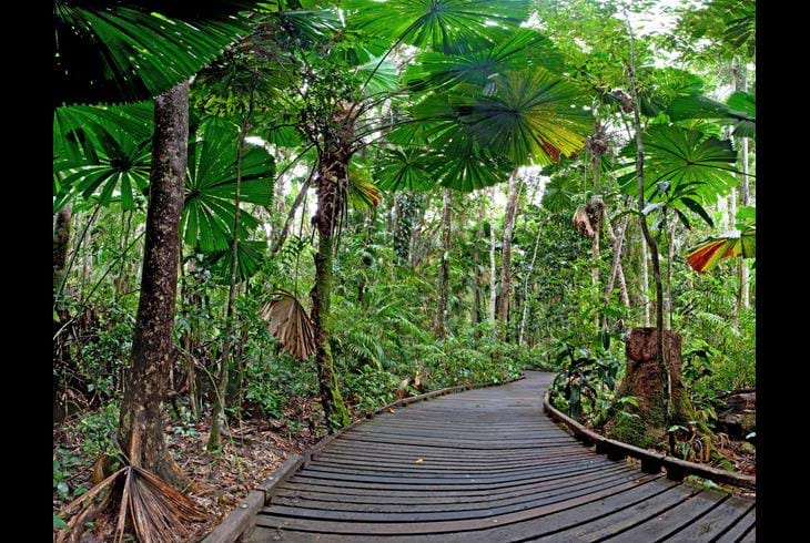 Cape Tribulation - Storbyferie i Australia