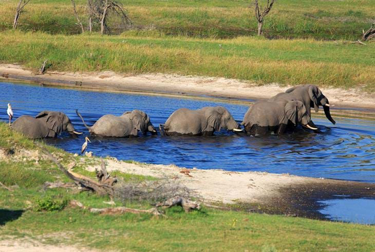 Elefanter krysser Boteti River - All inclusive safari i Botswana
