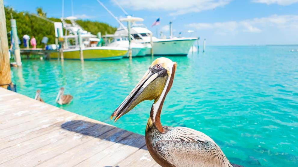 Key West, Florida Keys - Reiser til Florida
