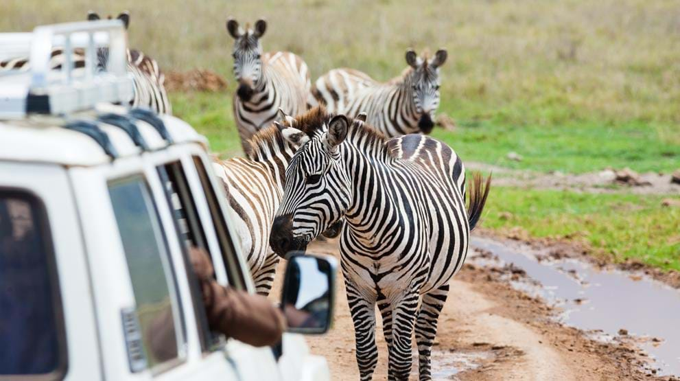 Game Drive - Safari i Ngorongoro-krateret