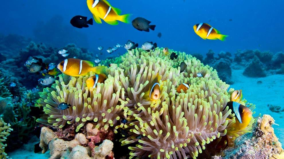 Fargerike fisk på Great Barrier Reef